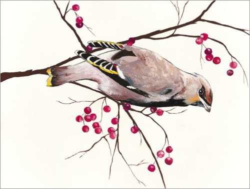 Póster Waxwing