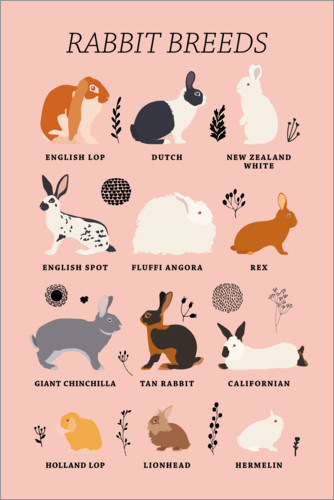 Póster Rabbit breeds