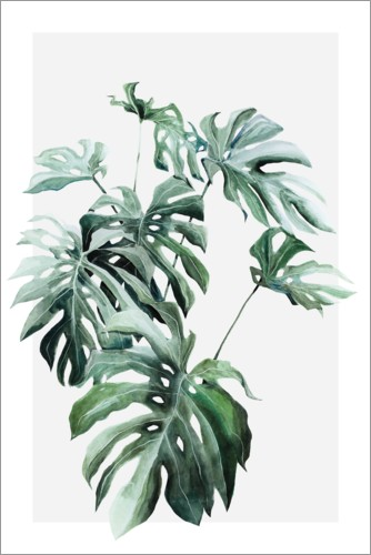 Póster Planta de monstera