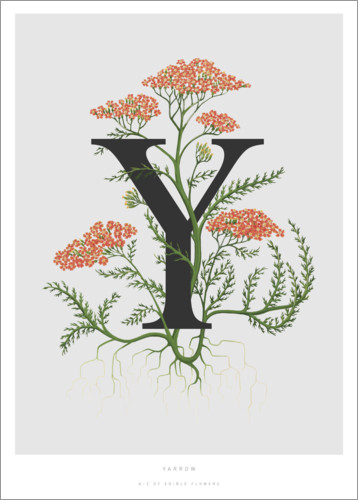 Póster Y is for Yarrow