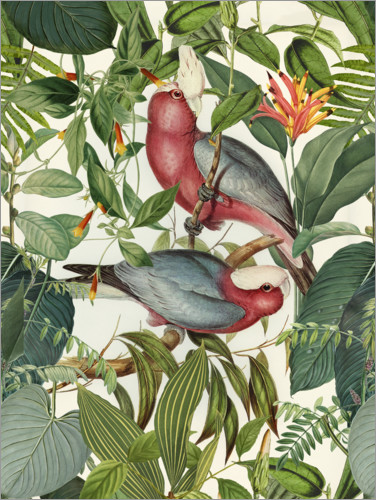 Póster Aves tropicales