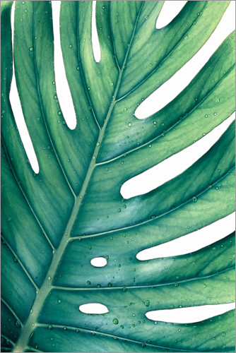 Póster Monstera verde