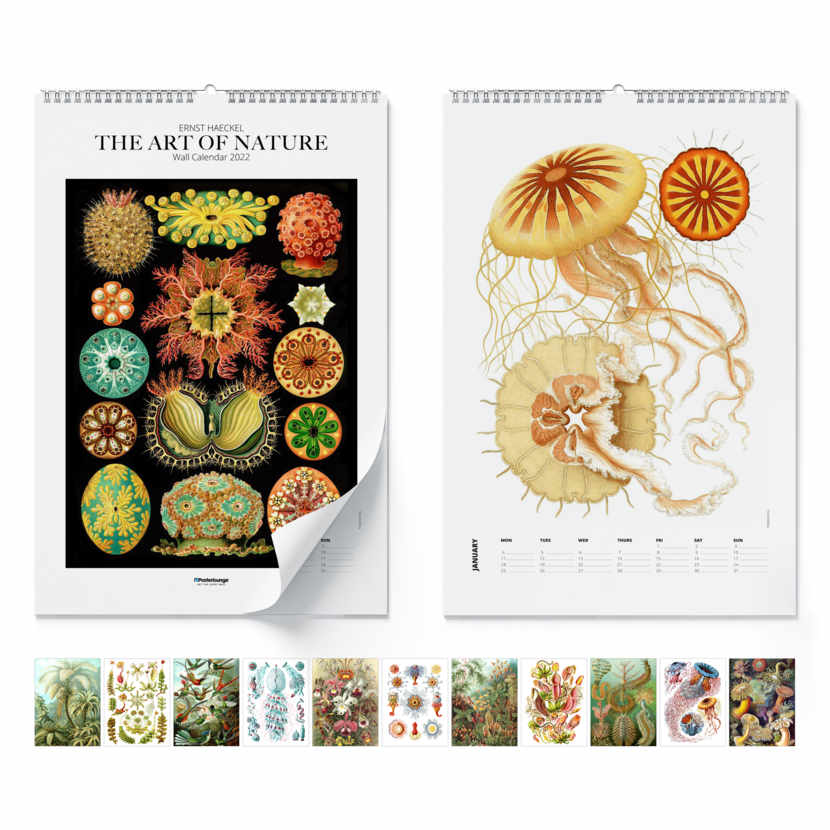 Calendario de pared Ernst Haeckel, The Art Of Nature 2021