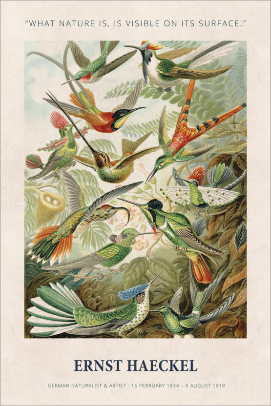 Póster Ernst Haeckel - What nature is