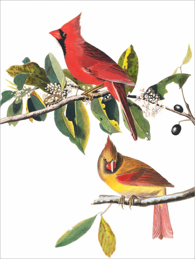 Póster Cardenales