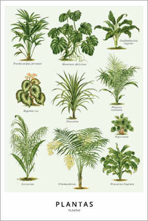 Póster  Tipos de plantas - Wunderkammer Collection