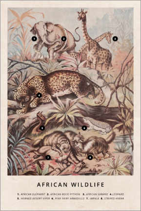 Póster  Fauna africana (vintage) - Wunderkammer Collection