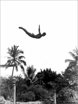 Póster  Springboard diver over palm trees