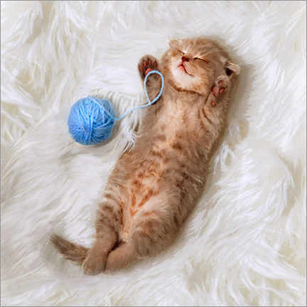 Vinilo para la pared Kitten with a ball all of wool