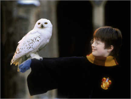 Cuadro de metacrilato  Harry Potter and the Sorcerer's Stone - Harry & Hedwig