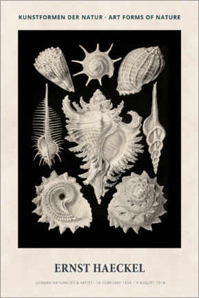 Lienzo  Ernst Haeckel - Art forms of nature II - Museum Art Edition