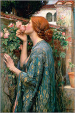 Vinilo para la pared  Alma de la rosa - John William Waterhouse