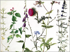 Vinilo para la pared  Eight Studies of Wild Flowers - Albrecht Dürer