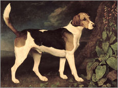 Vinilo para la pared  Ringwood - George Stubbs