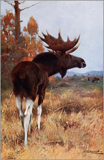 Vinilo para la pared  Elk or Moose - Wilhelm Kuhnert