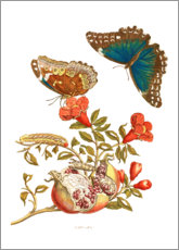 Póster  Pomegranate and Blue Morpho - Maria Sibylla Merian