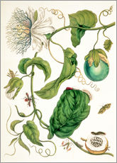 Vinilo para la pared  Passion flower and insects - Maria Sibylla Merian