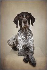 Cuadro de plexi-alu  German shorthaired pointer / 1 - Heidi Bollich