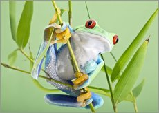 Vinilo para la pared  Red-eyed tree frog - Linda Wright