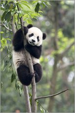 Vinilo para la pared  Panda on a tree - Tony Camacho