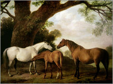 Vinilo para la pared Two Shafto Mares and a Foal