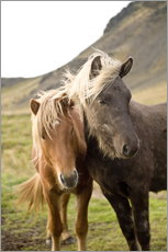 Vinilo para la pared  Horses, South Iceland, Northern Europe