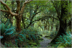 Vinilo para la pared  Primeval forest on kepler track, fiordland, new zealand - Peter Wey
