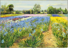 Vinilo para la pared  Flower field - Timothy Easton