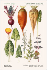 Cuadro de plexi-alu  Beetroot and other vegetables - Elizabeth Rice
