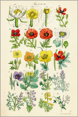 Vinilo para la pared  Wildflowers - Sowerby Collection