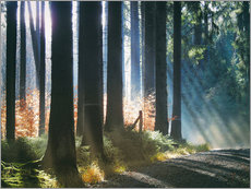 Cuadro de plexi-alu  Morning Light in the Forrest - Martina Cross