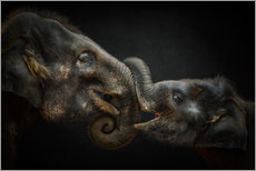 Vinilo para la pared Tenderness Asian Elephants