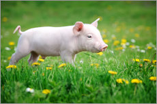 Vinilo para la pared  Piglets on a spring meadow
