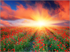Vinilo para la pared  Sunset over a field of red poppies