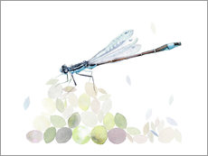 Vinilo para la pared  Dragonfly Building - Verbrugge Watercolor