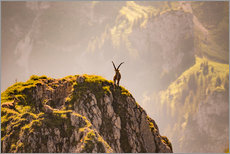 Cuadro de plexi-alu  Capricorn in the Alps - Michael Helmer