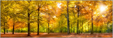 Vinilo para la pared  Colorful autumn forest in sunlight - Jan Christopher Becke