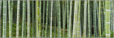 Cuadro de plexi-alu  Green bamboo forest in Kyoto, Japan - Jan Christopher Becke