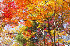 Vinilo para la pared  Colorful autumn leaves in the forest - Jan Christopher Becke