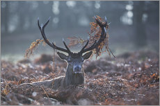 Cuadro de plexi-alu  Deer stag in the brushwood - Alex Saberi
