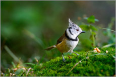Vinilo para la pared  Cute tit standing on the forest ground - Peter Wey