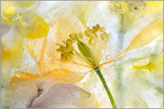 Cuadro de plexi-alu  Welsh Poppy - Mandy Disher