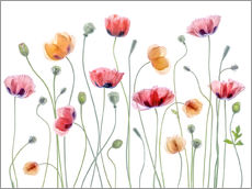Vinilo para la pared  Fiesta de amapolas - Mandy Disher