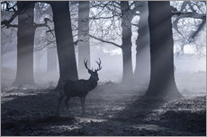 Cuadro de plexi-alu  A male red deer stag waits in the early morning mists of Richmond park, London. - Alex Saberi