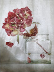 Vinilo para la pared  Still life with Hydrangea - Mandy Disher