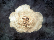 Cuadro de plexi-alu  White rose superimposed with floral texture - Alaya Gadeh