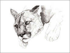 Vinilo para la pared  Sketch Of A Captived Mountain Lion - Ashley Verkamp