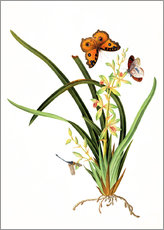 Vinilo para la pared  Butterflies and a dragonfly on a plant