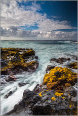 Cuadro de plexi-alu  Yellow Seaweed at the Coast of Big Island, Hawaii - Markus Ulrich