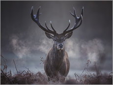 Vinilo para la pared  A majestic red deer stag breathes out in the winter air - Alex Saberi